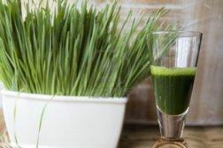 wheatgrass juice benefits for hormones